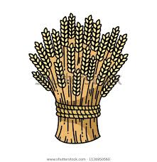 a drawing of a sheaf of wheat