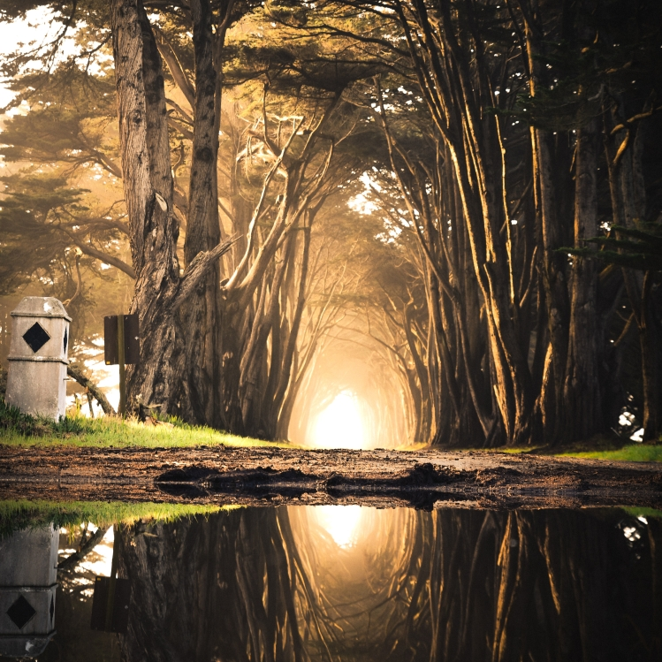 A body of water reflecting a mysterious glowing light at the end of a path lined with tall trees.